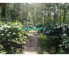 3 Acre Coffee Land for Sale Near Chikmagalur