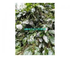 2 Acre Coffee Land for Sale Near Mallandur