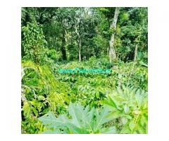 6 Acre Coffee Land for Sale Near Sakleshpur,Mudigere Main Road