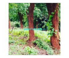 1 Acre Farm Land for Sale Near Chikmagalur