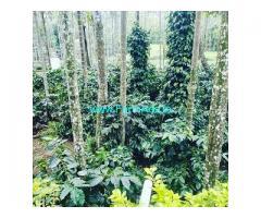 6 Acre Coffee Land for Sale Near Belur