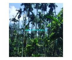 30 acre Pepper plantation for sale in Hassan
