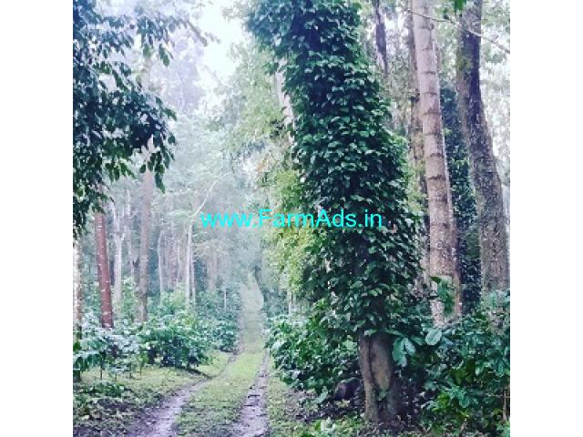10 acre coffee estate for sale in Hassan