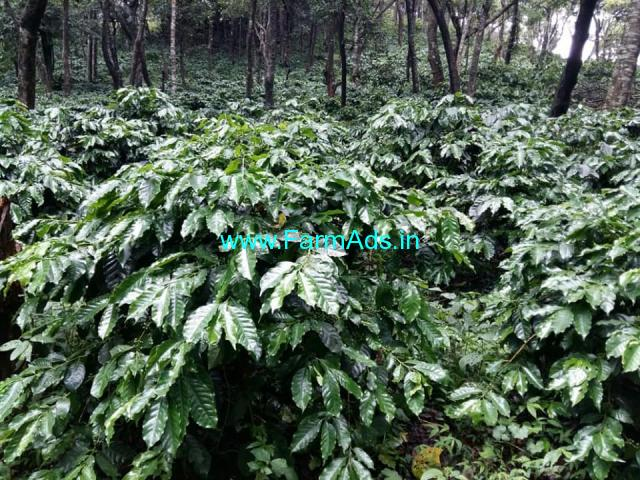 140 Acres Coffee Estate for sale at Sakleshpura.