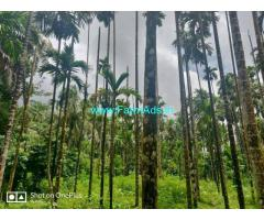 4.70 Acres Patta areca Farm land for sale  at Karkala