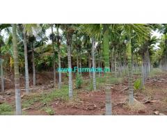 4 Acres Arecanut coconut plantation for sale Near VVS dam, Hiriyur