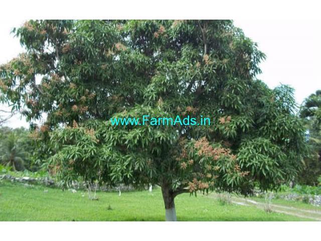 15.5 Acres Mango, coconut farm for sale at Palakkad dist, kollamkode