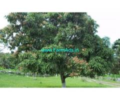 15.5 Acres Mango, coconut farm for sale at Palakkad dist, kollamkode