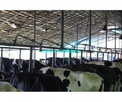 5.4 Acres Farm Land For Sale In Thodupuzha