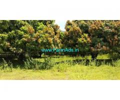 Total 5.67 Acers fully mangoes trees farm land for sale at periyakulam