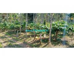 59 Cents Coffee Plantation for Sale at Meenangadi