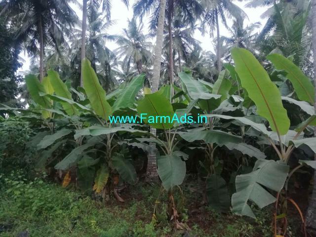 3.25 acre coconuts farm and banana farm for sale at  kumiitipathy