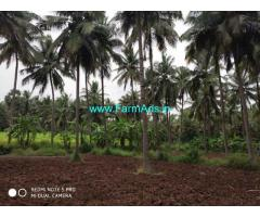1.15 acre coconut farm for sale at kozhinjampara, chittur