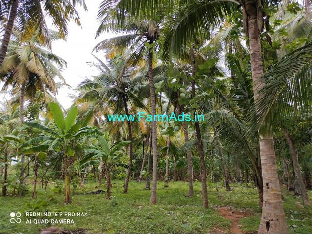 Theni district near periyakulam 1 acre coconut farm for sale
