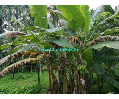 2.5 Acres Farm land for sale Dharmasthala - Subramanya Road