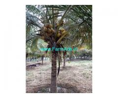 Coconut farm 7 acer for sale at palladam to udumali main road.