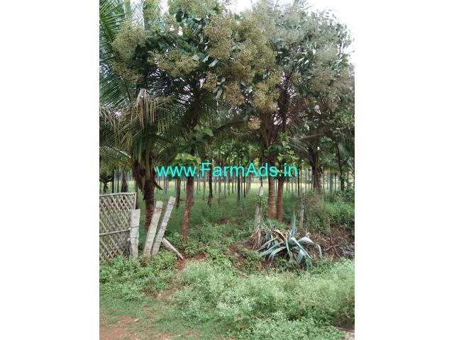 Well maintained 10 Acres  Areca plantation sale Near Hiriyur