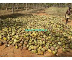 282 Acres Farm Land near Theni dt for sale.