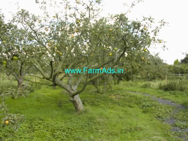 17 Acres Mango plantation for sale in Chikmagalur,Kadur Road