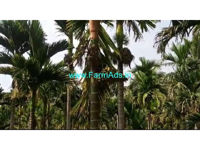 3 Acres Yielding Arecanut plantation for sale Babbur farm road, Hiriyur.