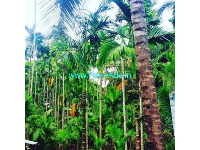 2.5 Acres Areca plantation for sale in Kadur