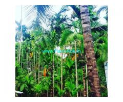 2.5 Acres Areca plantation for sale in Kadur