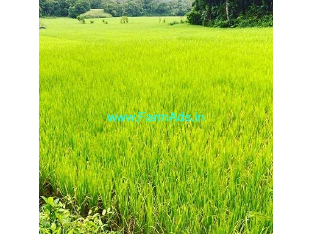 1 Acre 25 Guntas Paddy field for sale in Mudigere