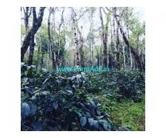 5 Acres well maintained Coffee Estate for sale in Mallandur