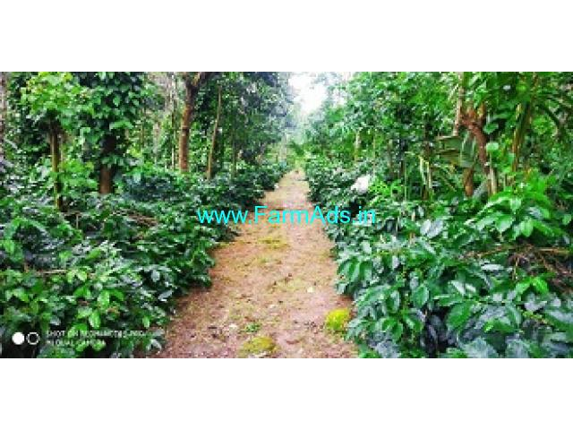 4 Acres Coffee Estate for Sale at Vastare