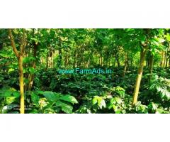 12 Acre Coffee Farm land for sale in Chikmagalur