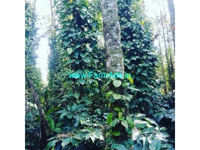 1.05 Acres Coffee Plantation for Sale near Chikmagalur Mudigere Road