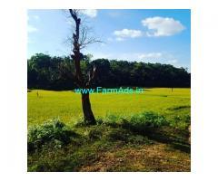 1.35 Acre Farm Land for Sale Near Mudigere
