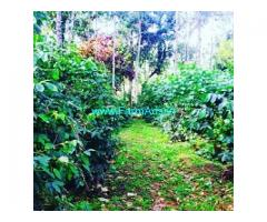 29 Acre Coffee Estate for sale in lower BabaBudanGiri