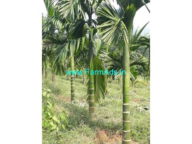 13 Acres Arecanut,coconut plantation for Sale near Belthangady