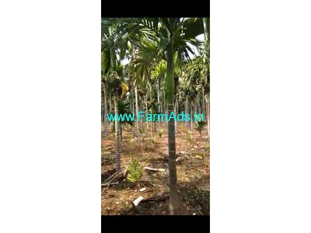 6 Acres Arecanut plantation for sale near Hiriyur