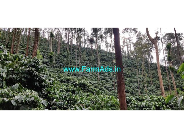 15.5 acres coffee plantation is for sale between Sringeri and Horanadu