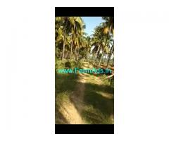 3 Acres Coconut grove for sale at Lakkavvanahalli, Hiriyur.