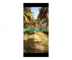 3 Acres Coconut grove for sale at Lakkavvanahalli, Hiriyur.