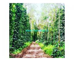 8 Acre Coffee estate for sale in Chikmagalur