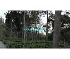 6 Acres Farm Land For sale In Kotagiri near Kodanad view point