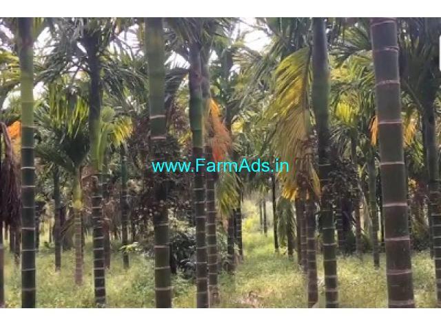 1.30 Acres Arecanut plantation for sale in Thondabhavi,Bangalore highway