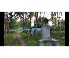 13 Acers fully coconut farm land for sale at periyakulam