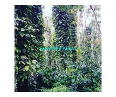 18 Acre coffee estate for sale in Belur