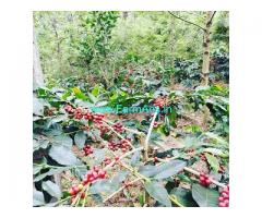 5 acre coffee estate for sale in Chikmagalur,Vastare