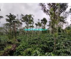 For Sale 7 Acres Of Coffee Plantation Land 9 km from Mudigere