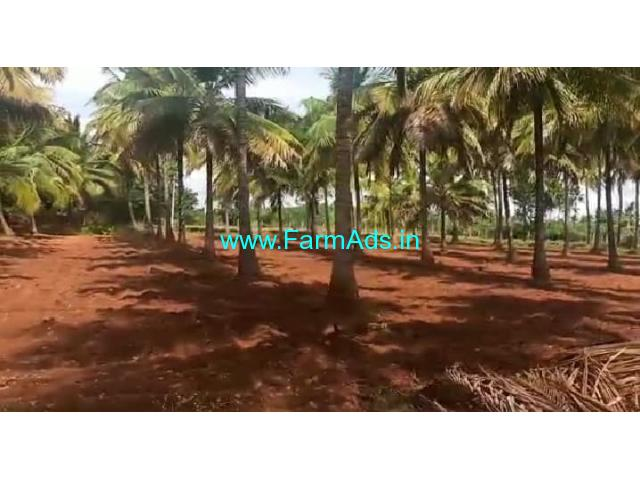 25 Acres Coconut plantation for sale at Muskal