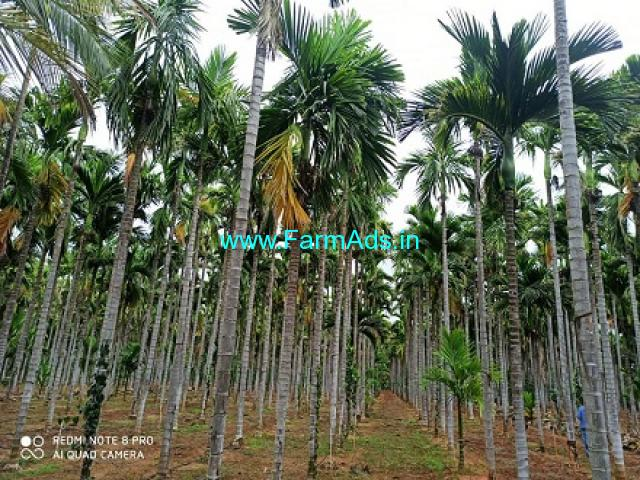 4.11 Acres Arecanut plantation for sale at Dharampura