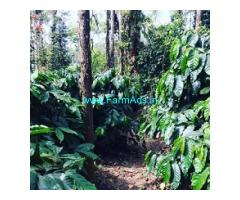 1.5 acre coffee estate for sale in Mudigere