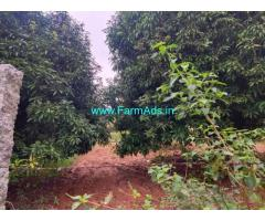 4.5 Acers Mango garden for sale at piler, 75 kms from tirupati