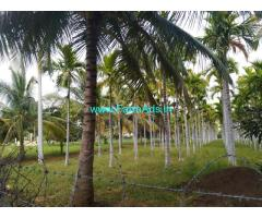 8.20 Acres maintained Areca plantation sale for in sira Town.